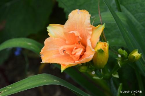jardin,chez Bernadette,puces,cygnes,pluie 127.JPG