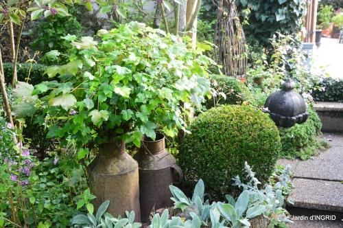 Tuillières,stenbergias,Jaune,jardin,chassis 213.JPG