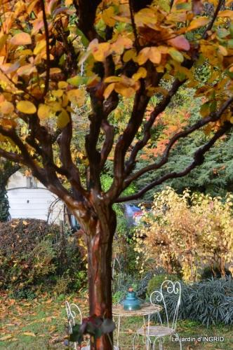 feuillages d'automne et tonte de la pelouse 054.JPG