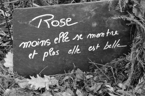 Arya,premières fleurs,roseraie 006.JPG