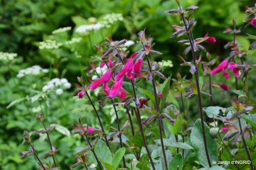jardin,portes ouvertes,Julie 057.JPG