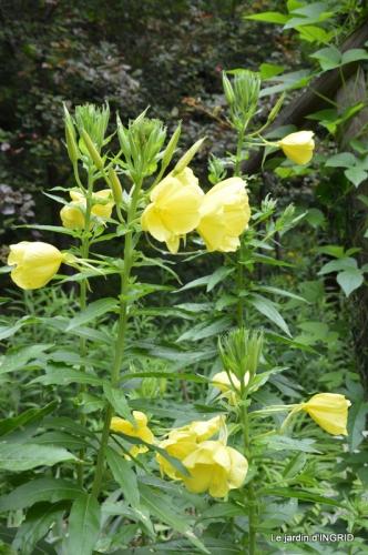 jardin,les filles,gerbera,Lalinde 168.JPG