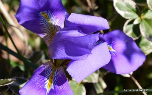 Grues et plantes à Ciron 068.JPG