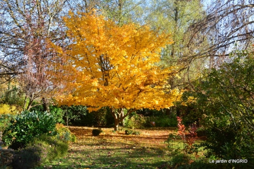 troc,automne,serre 074.JPG