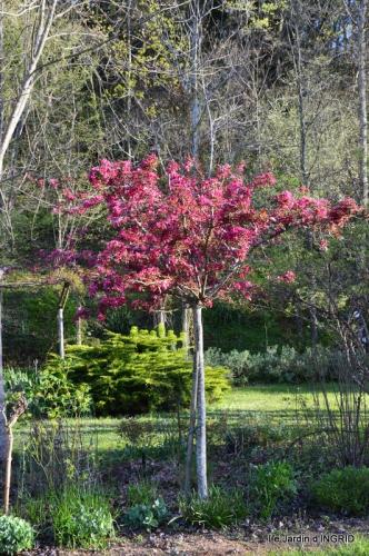 Bergerac, jardin ,arbres fruitiers,printemps 060.JPG