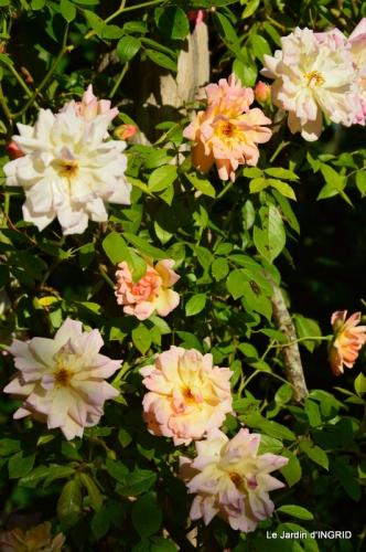fête de la fraise Vergt,roses jardin 086.JPG