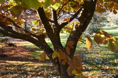 dernières automne,givre,chat 063.JPG