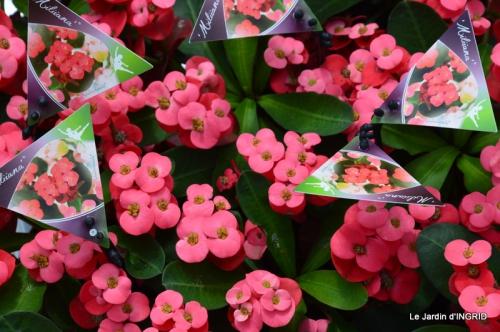 Cadouin,ancolies,roses,pollen,osier,photos Fabien,coquelicots 053.JPG