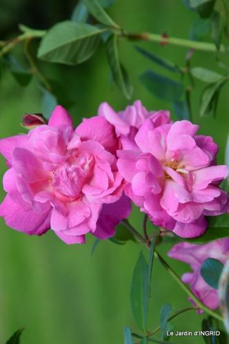 jardin Mme Perichou,grandes fleurs,bouquet,jardin 036.JPG