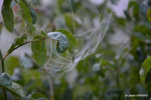 brouillard le matin d'automne 018.JPG