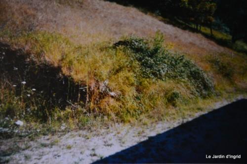 jardin,le cypres chauve,puces Mouleydier,vieilles photos 137.JPG