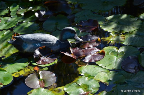jardin octobre,chez Marylaur,Arnaud ,Ariane,la mer,sauges 204.JPG