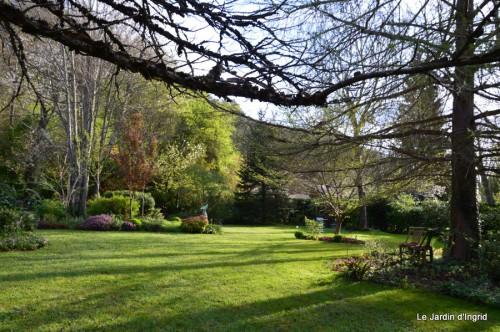 paquerettes,arums,laurier palme,jardin 072.JPG