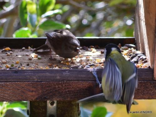enveloppes,oiseaux,jardin,héllébores 114.JPG