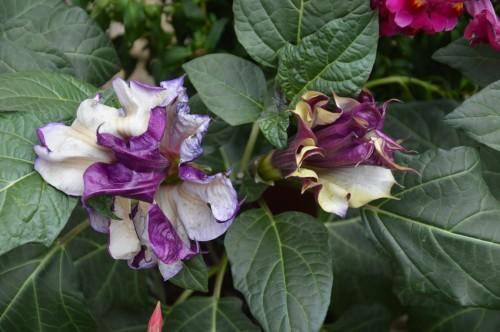 CADOUIN,cascade,iris,roses,fl.sauvages 067.JPG
