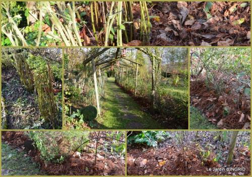 2015-12-03 oiseaux,travaux,arbustes,les dernières fleurs2.jpg