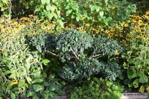 Tuillières,stenbergias,Jaune,jardin,chassis 148.JPG