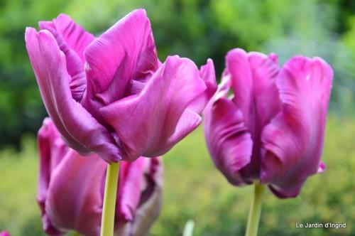 géraniums,glycine Monpazier,cabane,arums,fleurs sauvages 114.JPG