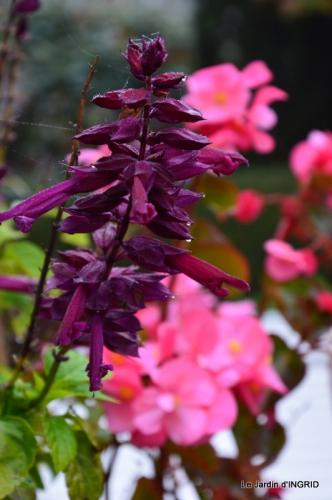 brume,dentelles,fleurs,Noel Jardiland 018.JPG