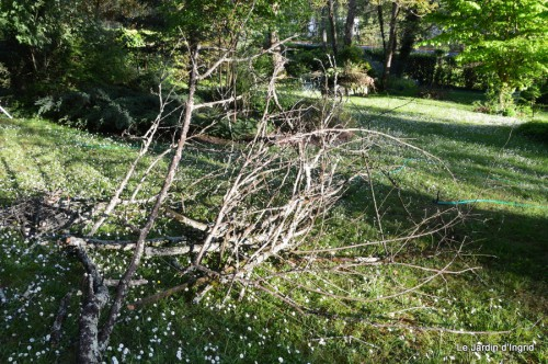 géraniums,glycine Monpazier,cabane,arums,fleurs sauvages 101.JPG