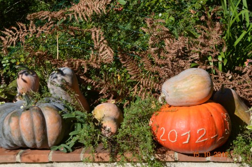 citrouilles,jardin,Combarel 001.JPG