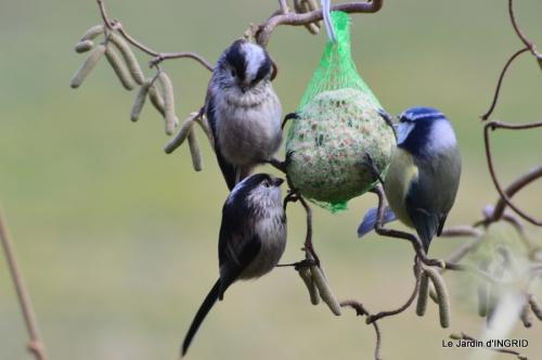 les oiseaux,les poules d'eau 123.JPG