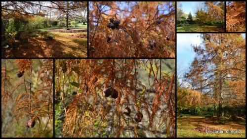 2013-11-30 les dernières de l'automne.jpg