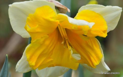 jardin (3 semaine de mars) 031.JPG
