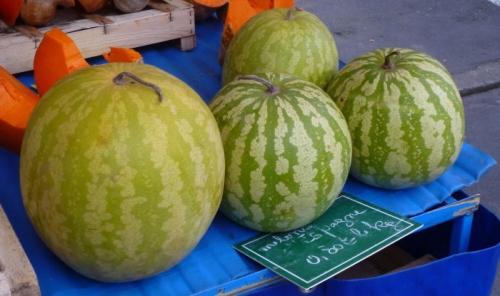 CTIFL–1528-Melon d'Espagne.jpg