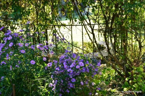 jardin,asters,fleurs blanches,chatte,rosiers roses 067.JPG