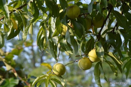 jardin,fruits,Caro,papillons,manthe religieuse,Lalinde 052-001.JPG