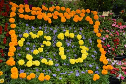 CADOUIN,cascade,iris,roses,fl.sauvages 040.JPG