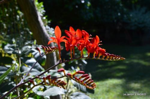 jardin juin,cabane,bouquet 015.JPG