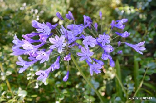 albizia,bouquet,plantes  en A 043.JPG