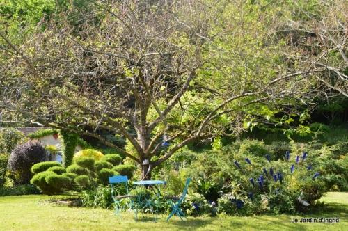 jardin avril et mai, 104.JPG