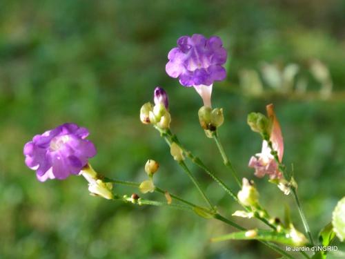 tour de jardin,bouquet,chez Bernadette, 049.JPG