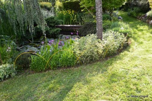 canal,fleurs blanches,marguerites,LE FLEIX,osier 174.JPG