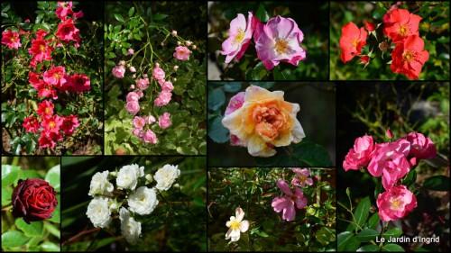 2014-10-14 jardin octobre1.jpg