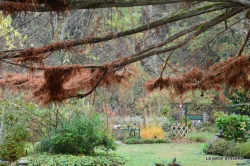 Brouillard,cypres chauve,jardinage 045.JPG