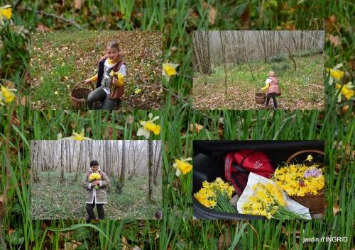 2017-03-03 jonquilles dans les bois1.jpg