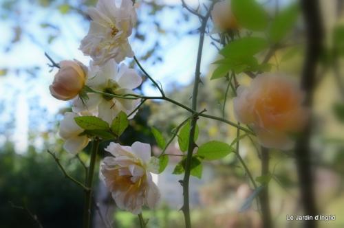 jardin automne ,travaux feuilles 006.JPG