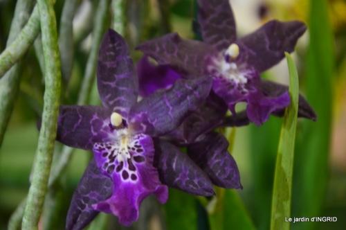 Orchidées,Noel jardiland,lever du soleil 027.JPG