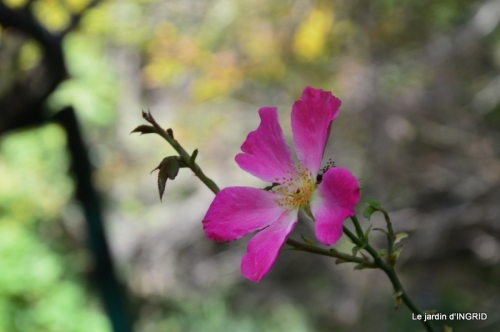 canal automne ,jardin,Ines 019.jpg