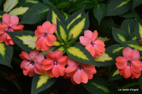 jardin,les filles,fleurs Peyrichou 021.JPG