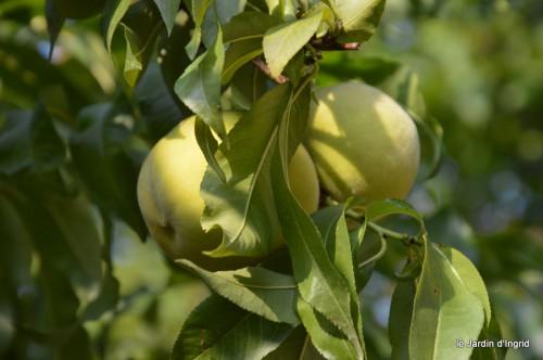 jardin,fruits,Caro,papillons,manthe religieuse,Lalinde 053-001.JPG