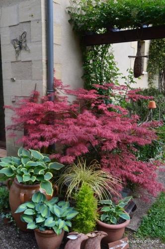 jardin avril et mai, 020.JPG