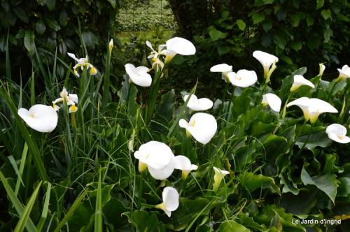 canal,fleurs blanches,marguerites,LE FLEIX,osier 075.JPG