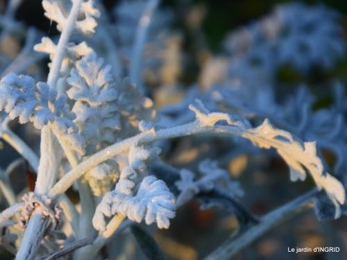 première gelée,compositions florales à garder,jardin 009-001.JPG