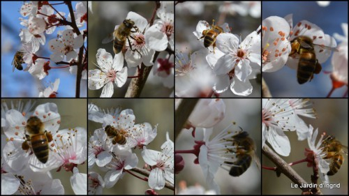 2014-02-23 travaux,brocante,abeilles,jonquilles,prunus,mimosa.jpg