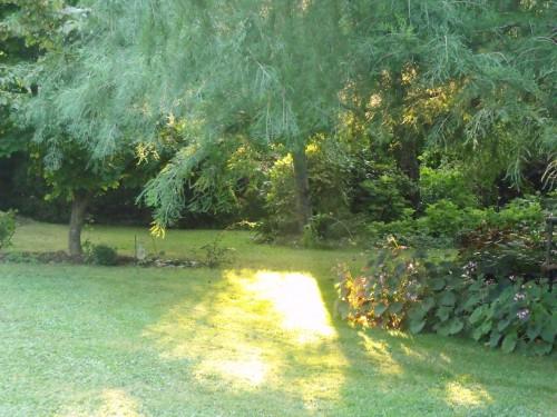 jardin,Arya,voiture,kois,nicky 011.JPG
